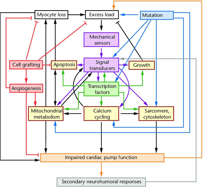 mutant wiring diagram