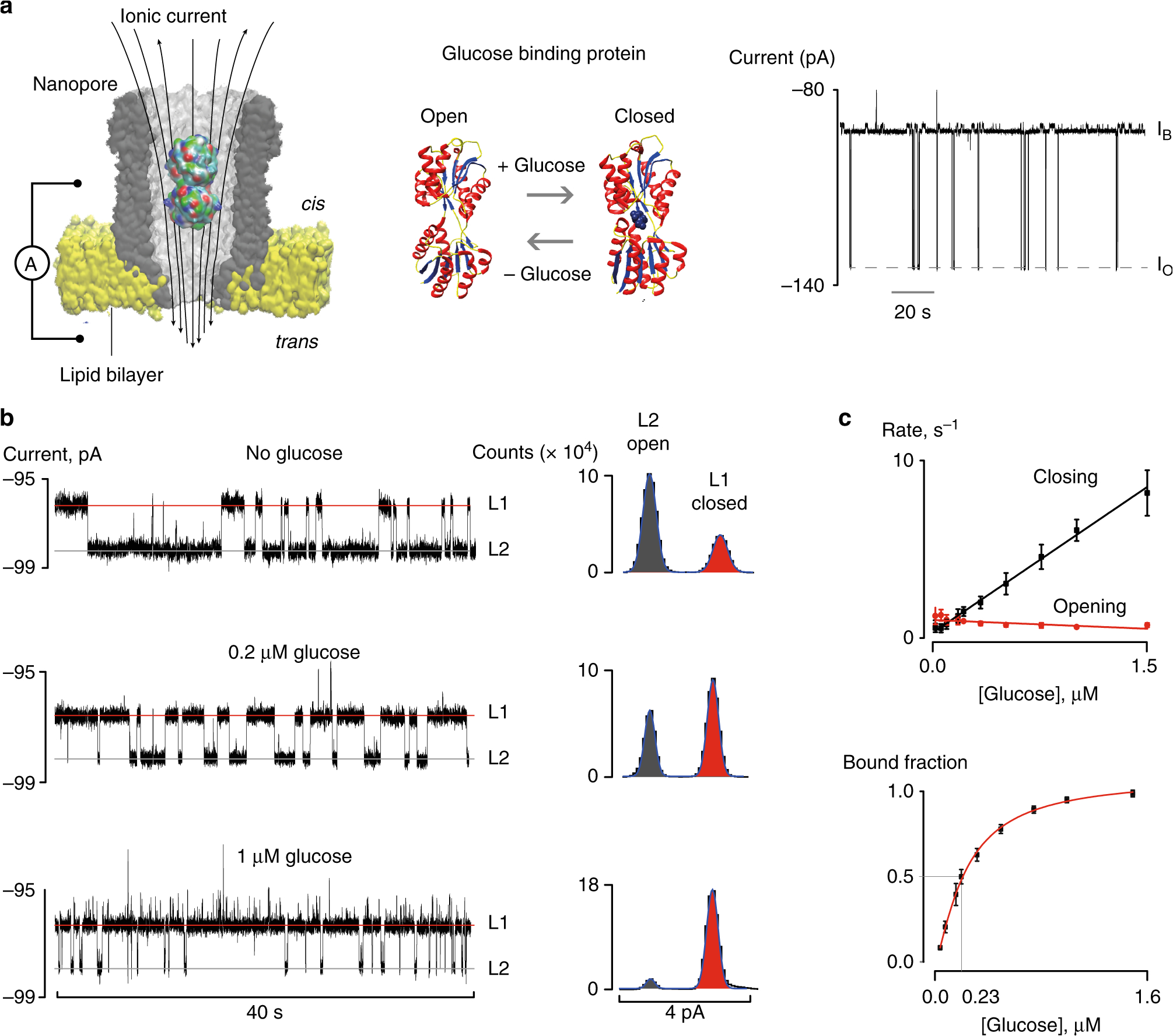 direct electrical quantification of glucose and asparagine from bodily fluids using nanopores nature communications