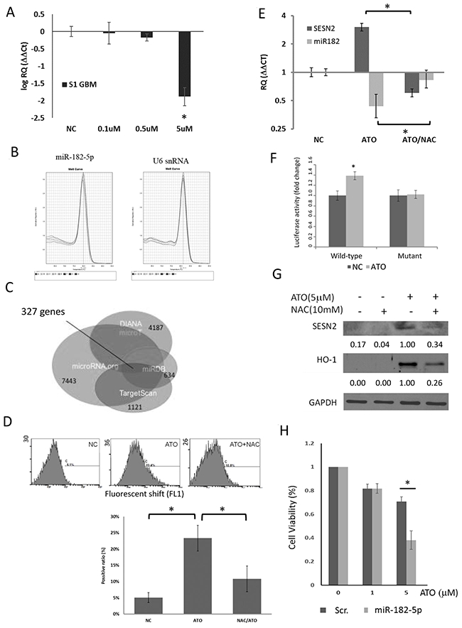 effect of ato on mir 182 5p expression in s1 gbm cells