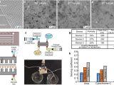 Allen Bradley 700 Hr Wiring Diagram Bilayer Graphene Oxide Membranes for A Wearable Hemodialyzer