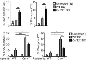 Dp 241 8 24 Wiring Diagram Ccl22 Controls Immunity by Promoting Regulatory T Cell Communication