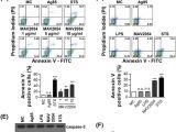 Dp 241 8 24 Wiring Diagram Mycobacterium Avium Mav2054 Protein Induces Macrophage Apoptosis by