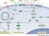 Iota Dls 55 Wiring Diagram Molecular Mechanisms Underlying Alcohol Drinking Behaviours