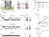 Kim Hotstart Wiring Diagrams Direct Electrical Quantification Of Glucose and asparagine From