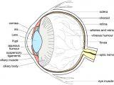 Photo Eye Wiring Diagram Eye Diagram Label Tunic Wiring Diagrams Schema