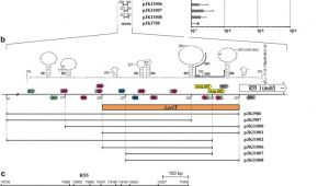 Shine top Ls 102 Wiring Diagram Identification Of orit and A Recombination Hot Spot In the Inca C