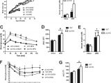 Sole F63 Wiring Diagram High Fat Diet Fed Ampk 2 Ko Mice Gain More Weight Over Time