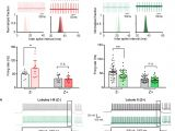 Sole F63 Wiring Diagram Trpc3 is Essential for Functional Heterogeneity Of