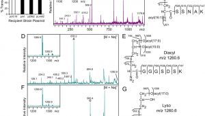 Ut Electronic Controls 1018 Wiring Diagram Copper Induced Expression Of A Transmissible Lipoprotein